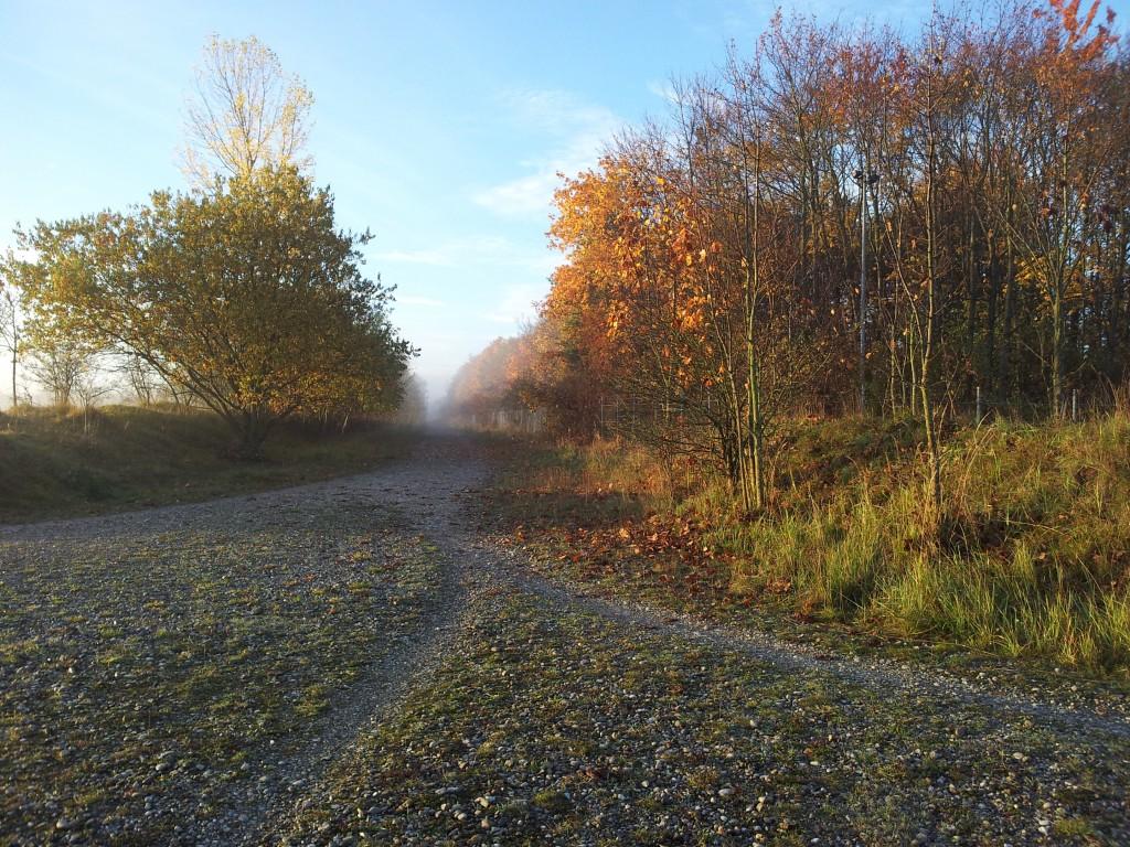 autumn 5